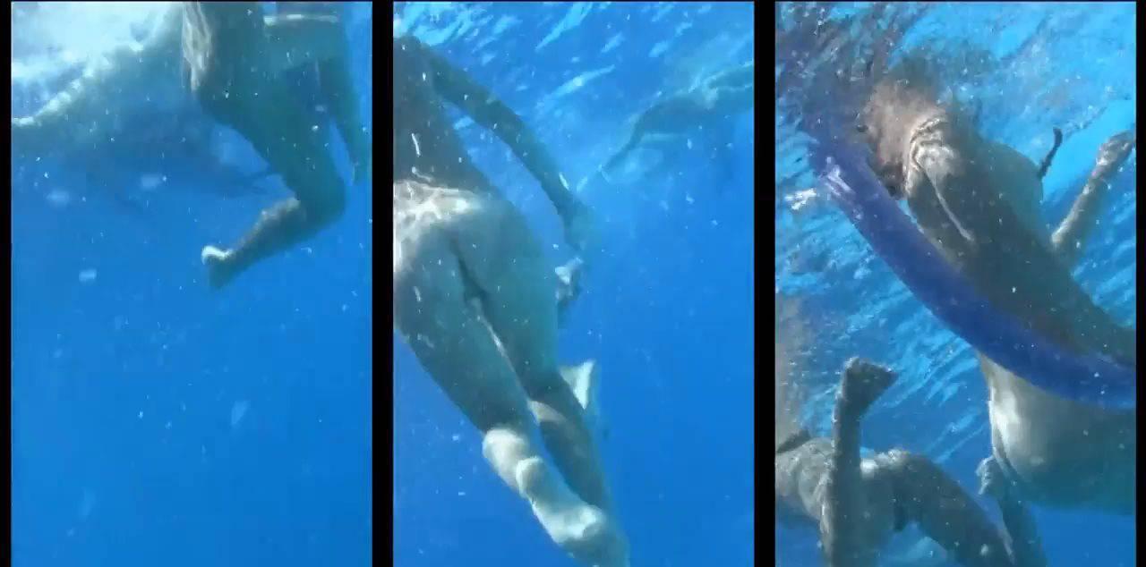 Candid-HD Videos Amazing Dolphin Encounter - 2